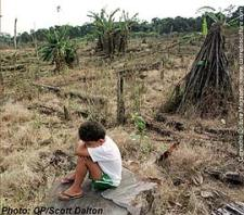 Colombian child sitting in the middle of his family`s fumigated coca field.